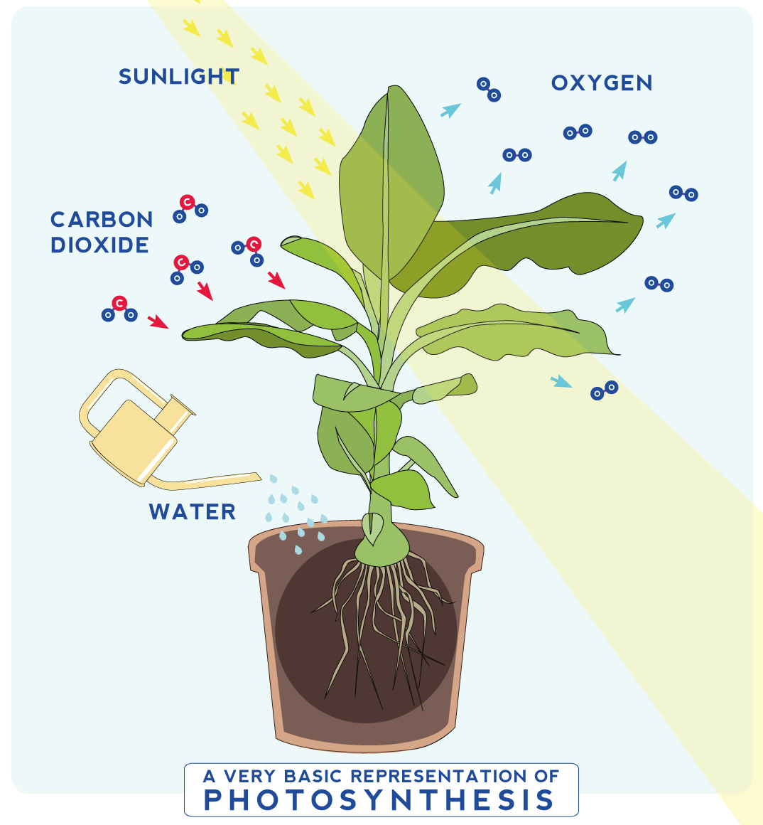 6 Reasons to get houseplants now - # 01 Plants create oxygen | infographic by House of Thol