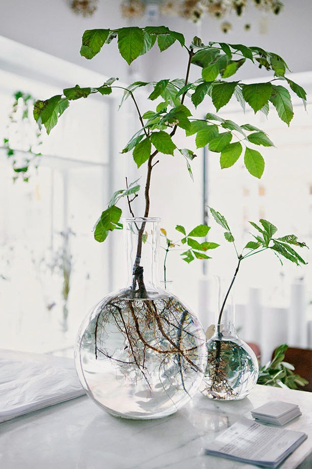 6 reasons to get houseplants now - # 06 Plants are pretty | Photograph by Ida Borg for Swedish Magazine Residence