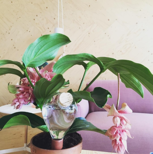 6 reasons to get houseplants now - # 06 Plants are pretty | photograph by Edwin Pelser
