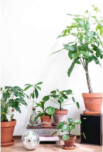 6 reasons to get houseplants now - # 06 Plants are pretty | photograph by Wonderwoud