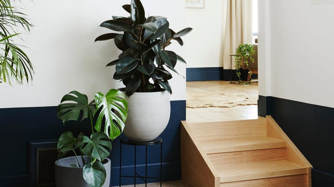 6 reasons to get houseplants now - # 05 Houseplants are natural humidifiers | photograph by Domain