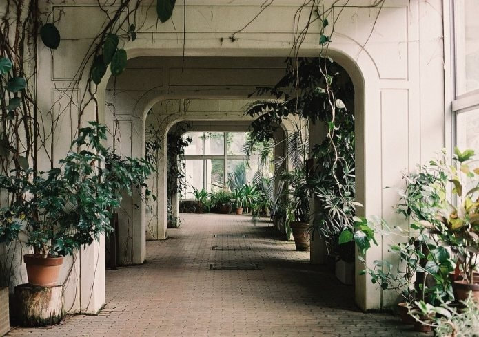 6 reasons to get houseplants now - # 06 Plants are pretty | Inokashire Park Zoo / photograph by Meiko Film