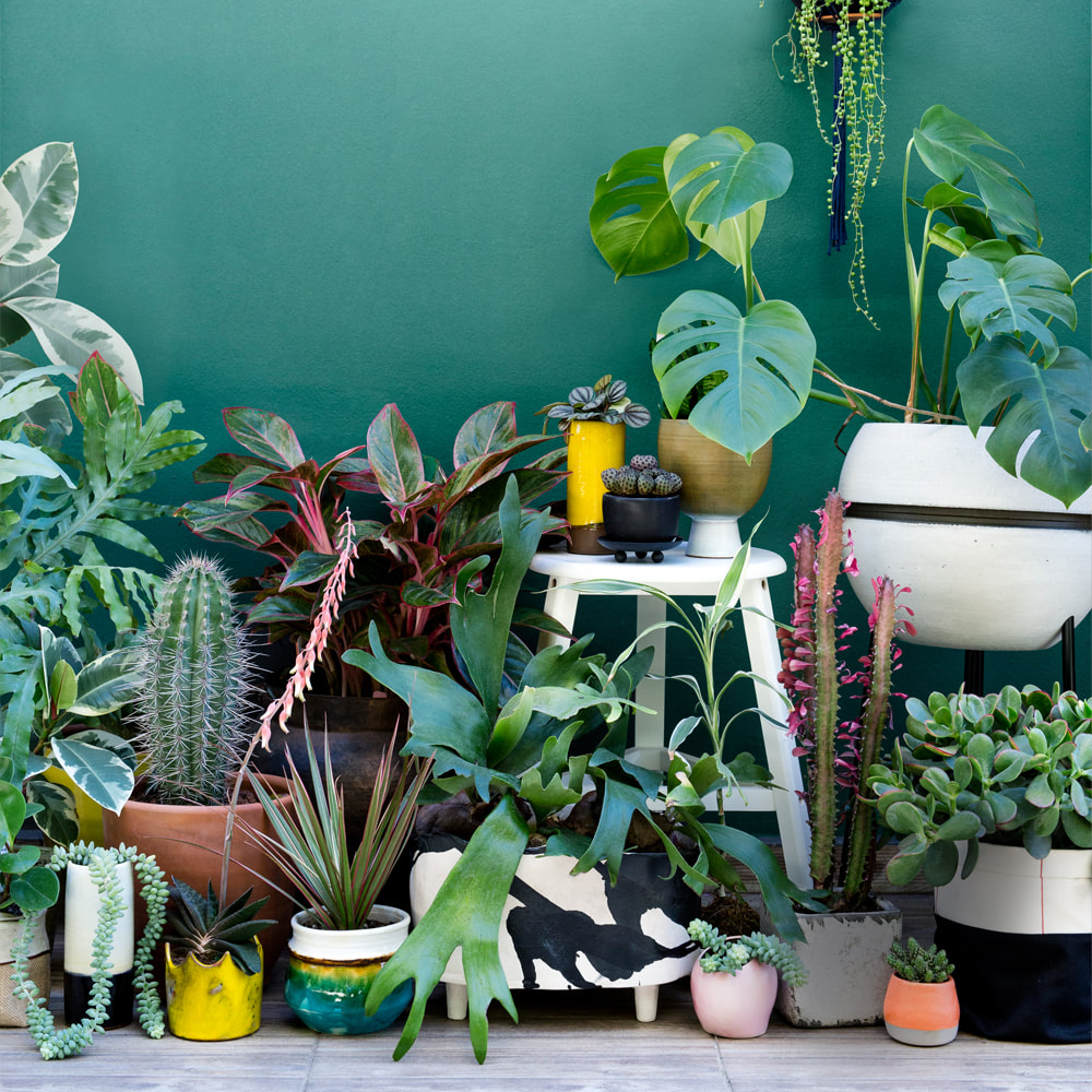 6 Reasons to get houseplants now | photograph by Urban Jungle Bloggers
