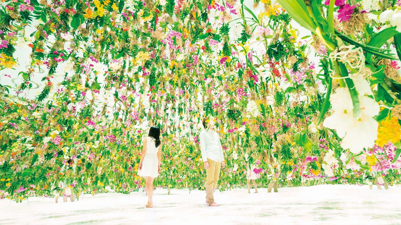 Teamlab's floating flowers are all i can think of | photograph by Teamlab