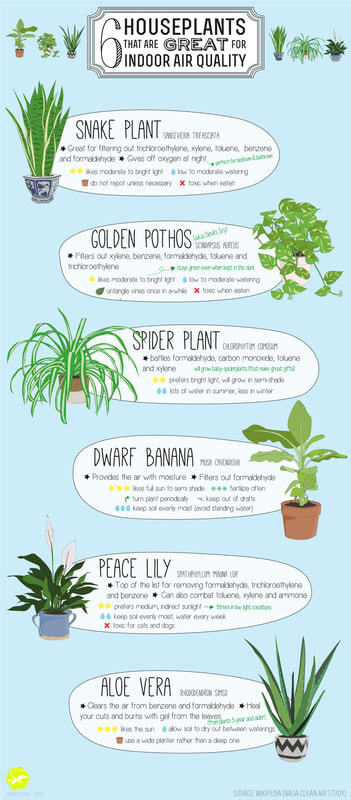 6 houseplants that are great for indoor air quality - infographic by House of Thol