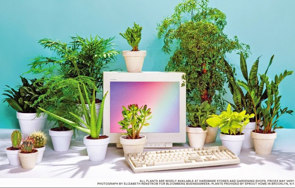 6 reasons to get houseplants now - # 03 Plants make you smart | photograph by Bloomberg
