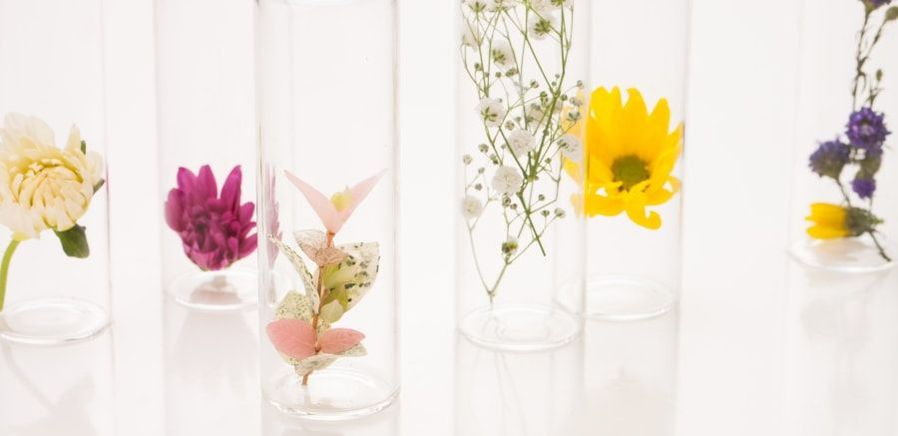 A Rookie's guide to flower care by House of Thol - 9 steps to keep your flowers fresh for longer