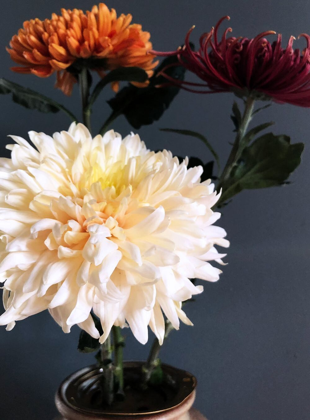 The Three-week golden Flower: Chrysanthemum history, types and care // blogpost by House of Thol